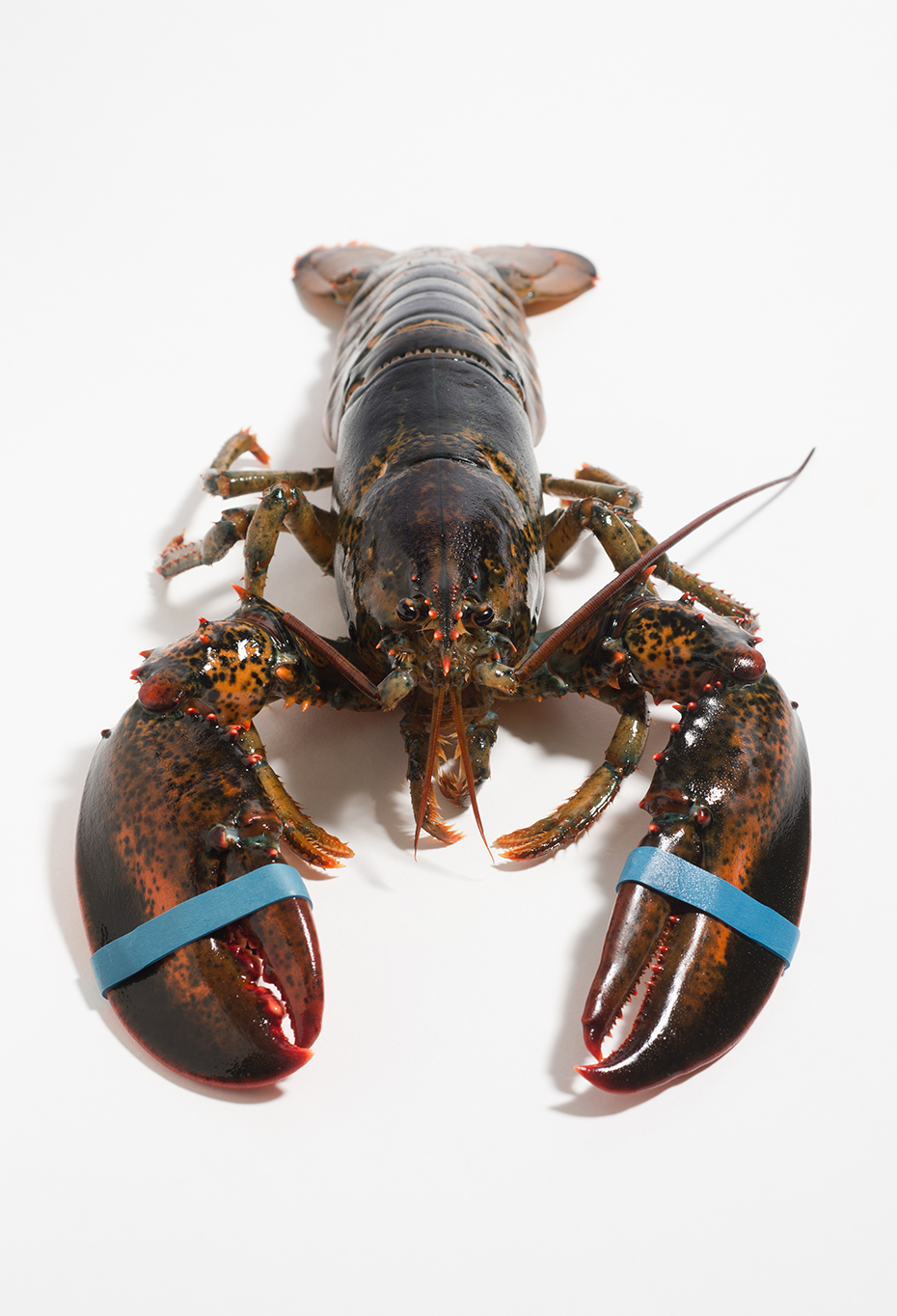 The Lobster Online