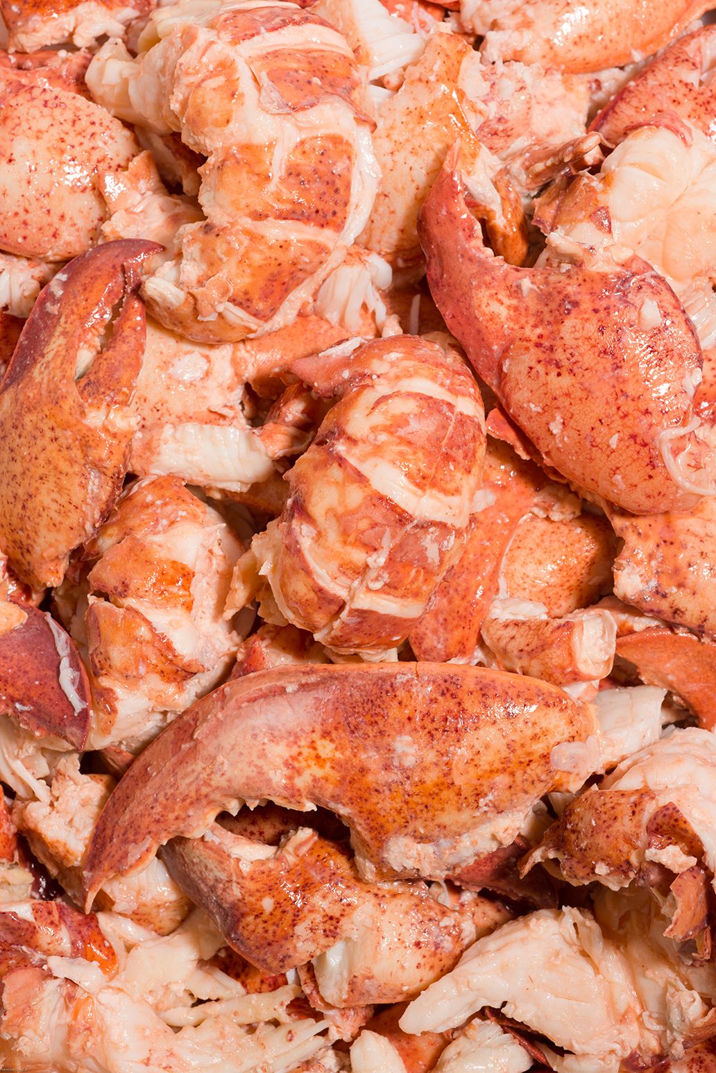 Fresh Maine Lobster Meat • Harbor Fish Market