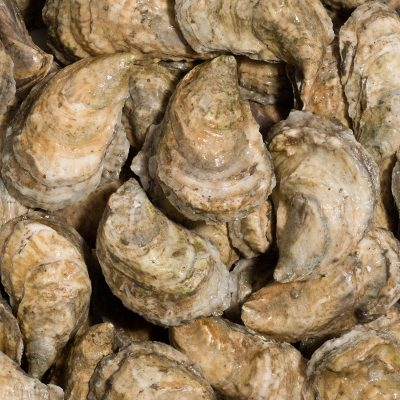 OystersProduct@0,3x