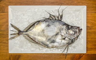 John Dory:  Everything you need to know