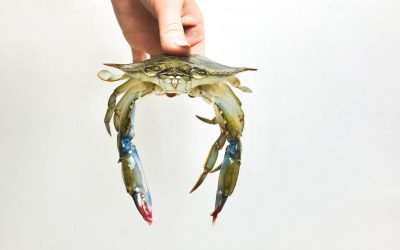 Soft Shell Crabs: What are they & what do you do with them?