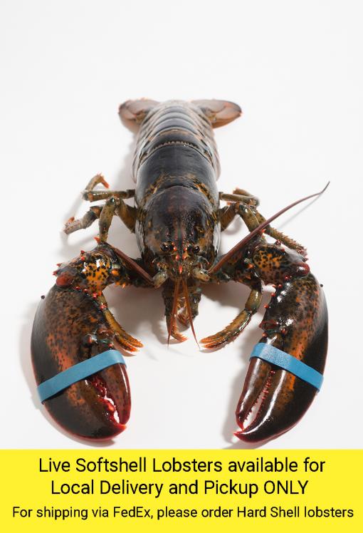 Softshell Lobster