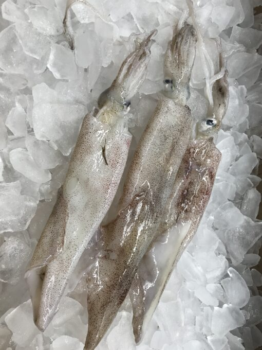 Calamari Whole