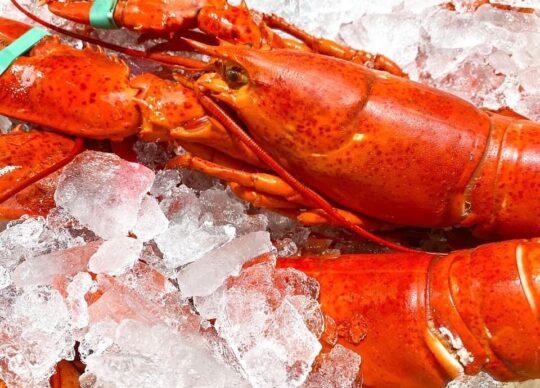 Maine 'Shedder' Lobsters